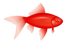 فایل png ماهی قرمز