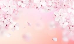 وکتور شکوفه های بهاری صورتی 2