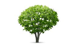 وکتور درخت 1