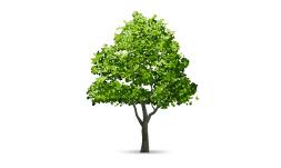 وکتور درخت 3