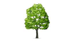 وکتور درخت 5